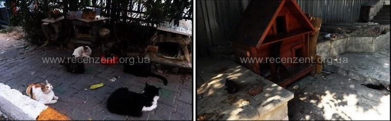 Коты и кошки в Турции