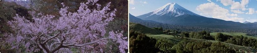 Последний Самурай 2003 - Великолепные пейзажи