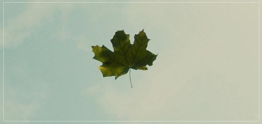 A symbol of descending leaf